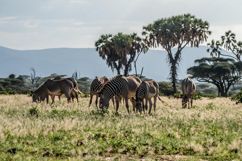 Samburu (4 of 70).jpg