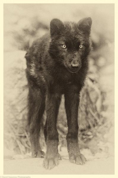 Haida Puppy Proud.jpg