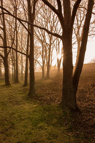 Tree Fog at Fort Williams 2.jpg