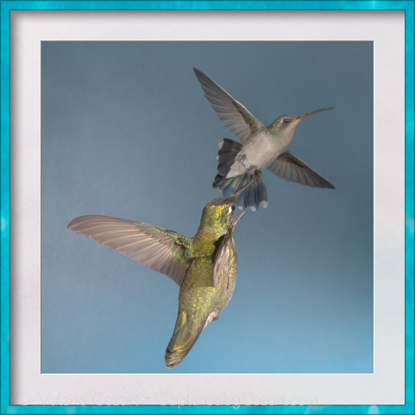 The Hummingbird Series
