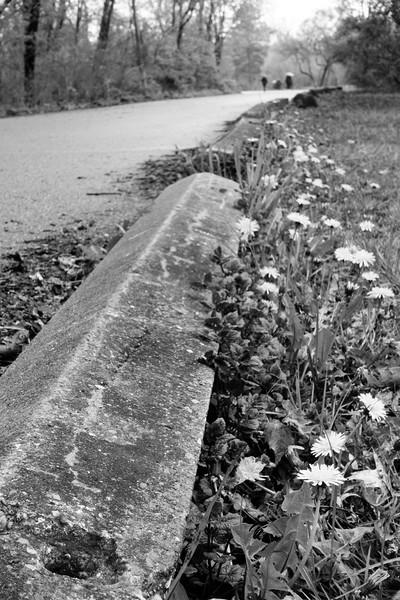 Roadside Dandelions