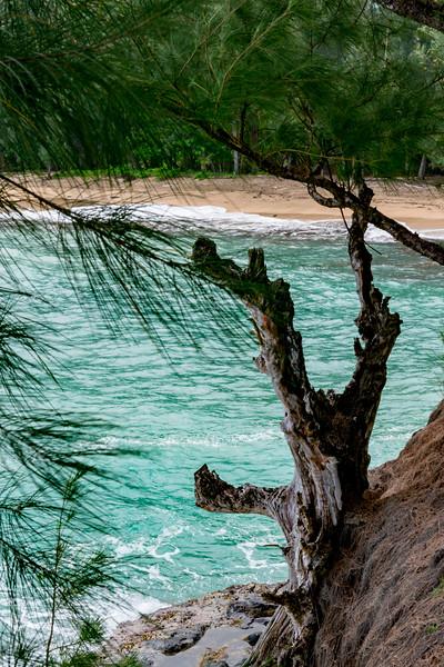 Kauai-2192.jpg