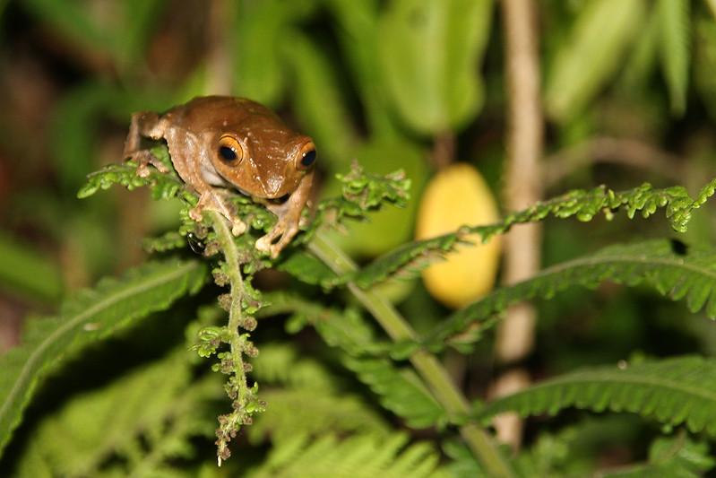 Madagascar, Fauna & Flora 5 Oda.jpg