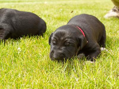 Maruskie Puppies #1 - 2014