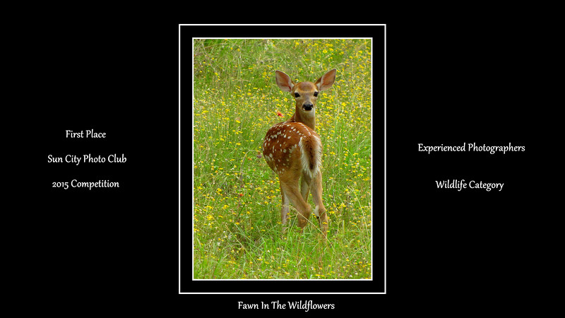 01-Fawn In The Wildflowers.jpg