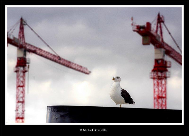One legged bird (68209019).jpg
