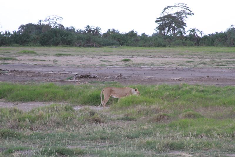 Kenya 2019 #2 1379.JPG