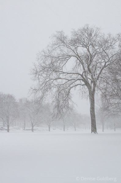 a tree in heavy snow