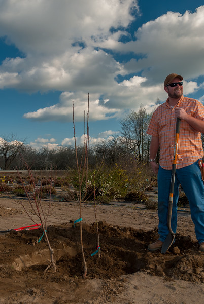 Photos showing the 3 in space of 1 tree planting. Three Peach trees in this combination.