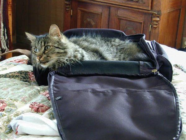 620_Sage_suitcase.jpg