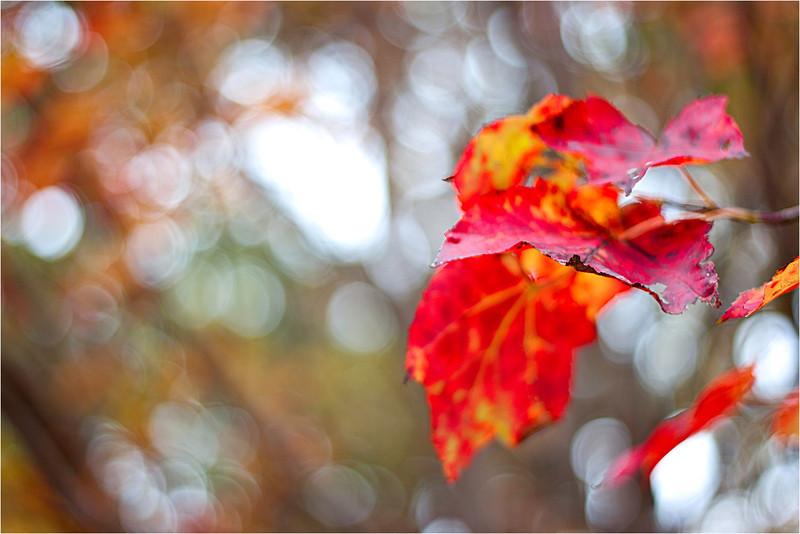 20111019_Autumn02.jpg