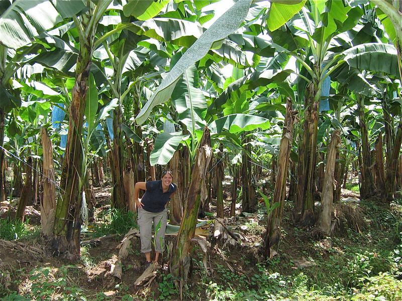 Del Monte bananen, Costa Rica.