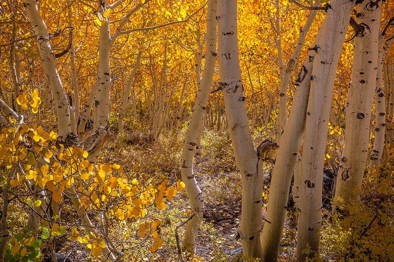 Eastern_Sierra_Autumn_MG_3119.jpg