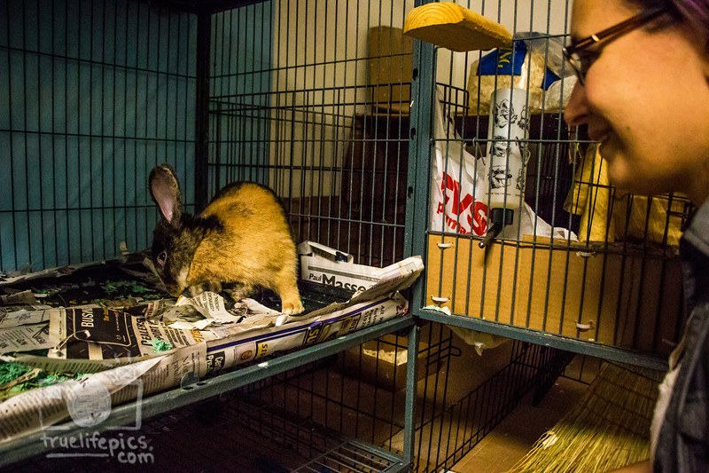 August 16, 2016 12 day old kits visit Daddy Bunny (12).jpg