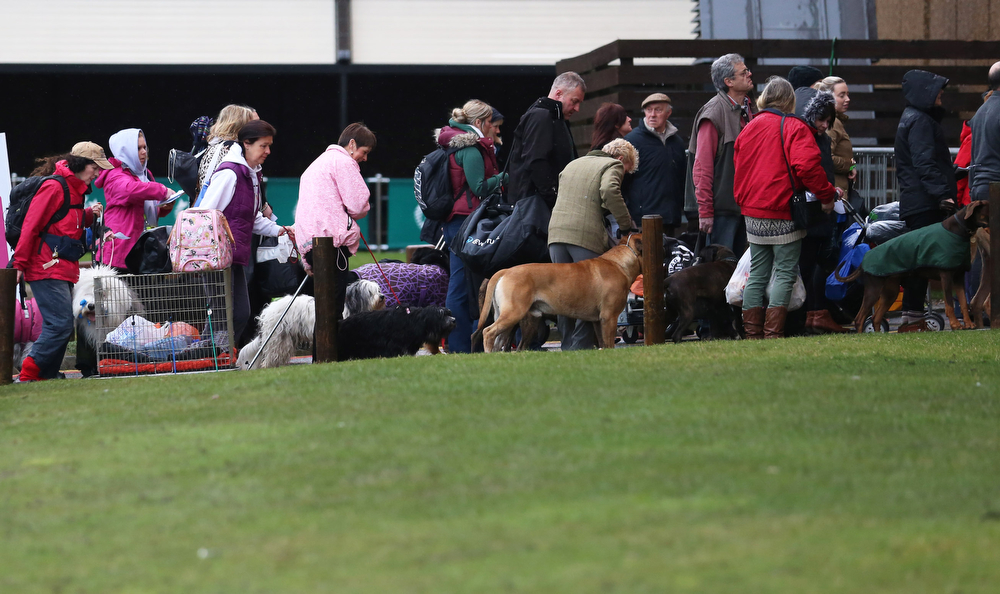 Description of . Dogs and their owners arrive to attend the first day of Crufts dog show at the NEC on March 6, 2014 in Birmingham, England. Said to be the largest show of its kind in the world, the annual four-day event, features thousands of dogs, with competitors traveling from countries across the globe to take part. Crufts, which was first held in 1891 and sees thousands of dogs vie for the coveted title of 'Best in Show'.  (Photo by Matt Cardy/Getty Images)