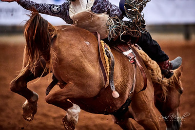 Dripping Springs Rodeo 2019