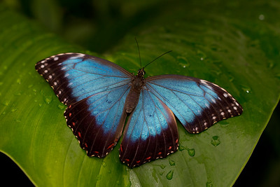 Natural History Museum - Sensational Butterflies