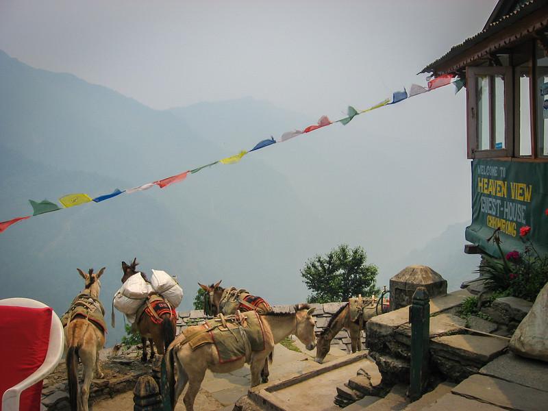 trekking-nepal-21.jpg