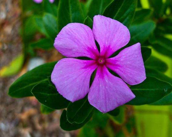 Botanical Garden (Freeport)