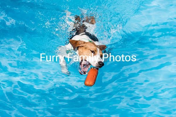 Saturday Splash 7