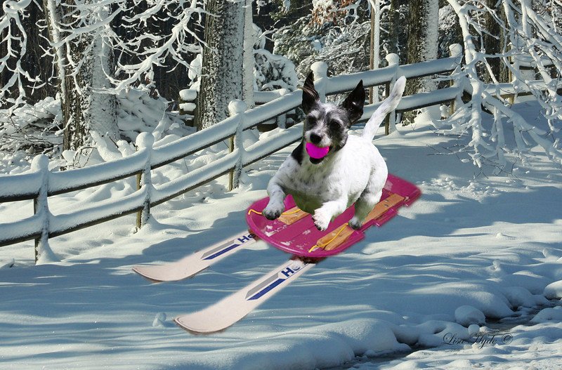 Cookie Skiing JANUARY signed.jpg