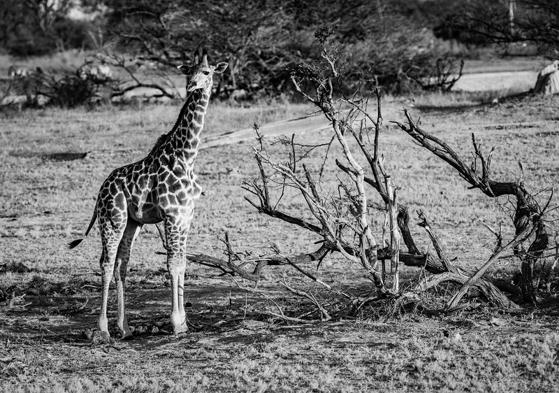 Botswana_June_2017 (977 of 6179).jpg