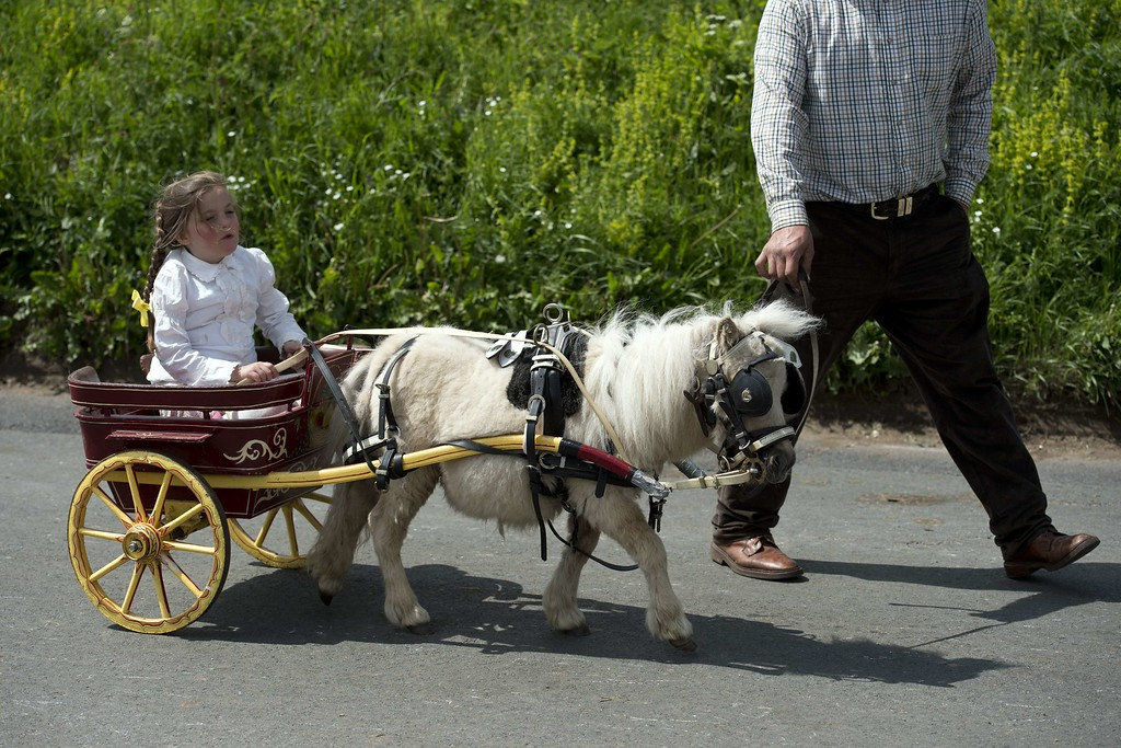 . A girl travels in a miniature horse-drawn carriage on the opening day of the annual Appleby Horse Fair, in the town of Appleby-in-Westmorland, North West England on June 4, 2015. The annual event attracts thousands of travelers from across Britain to gather and buy and sell horses. AFP PHOTO / OLI  SCARFF/AFP/Getty Images