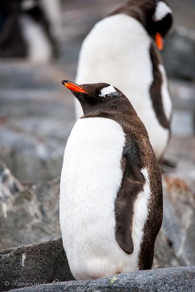 Antarctic-41