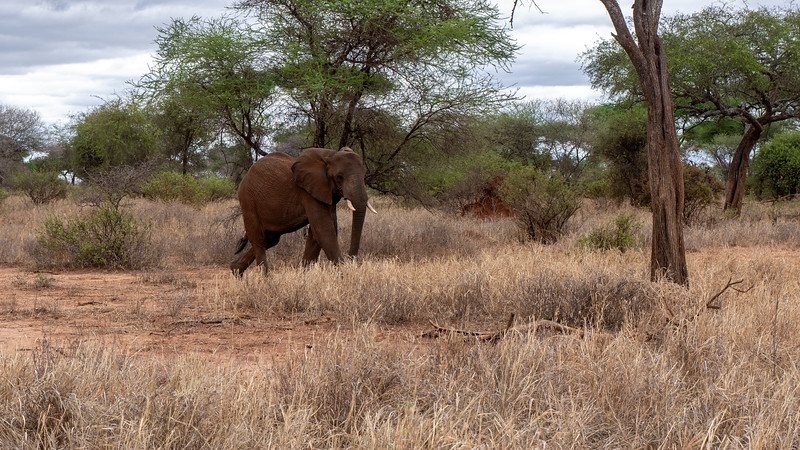 Tanzania-Tarangire-National-Park-Safari-Elephant-01.jpg