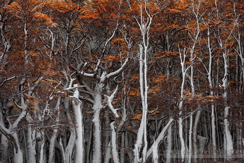 Patagonia - Snow 4.jpg