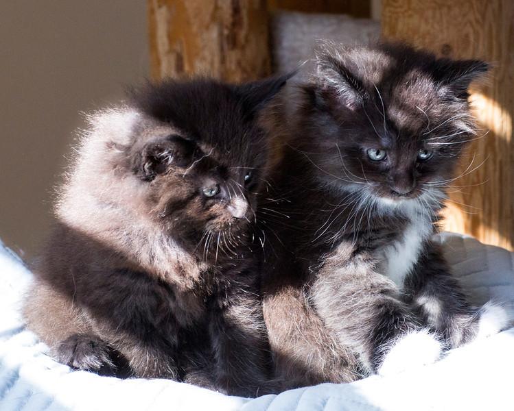 Kittens235.jpg