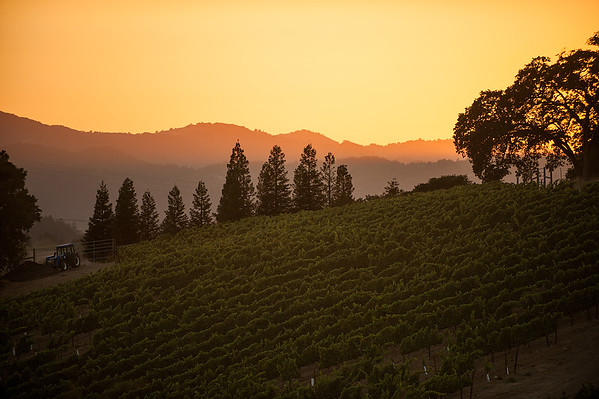 Seghesio Vineyards
