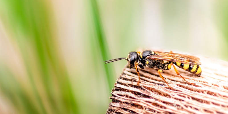 Wildlife: Wasps
