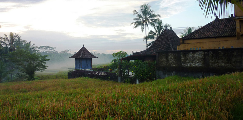 early morning mist over the rice field, this is like living in a painting