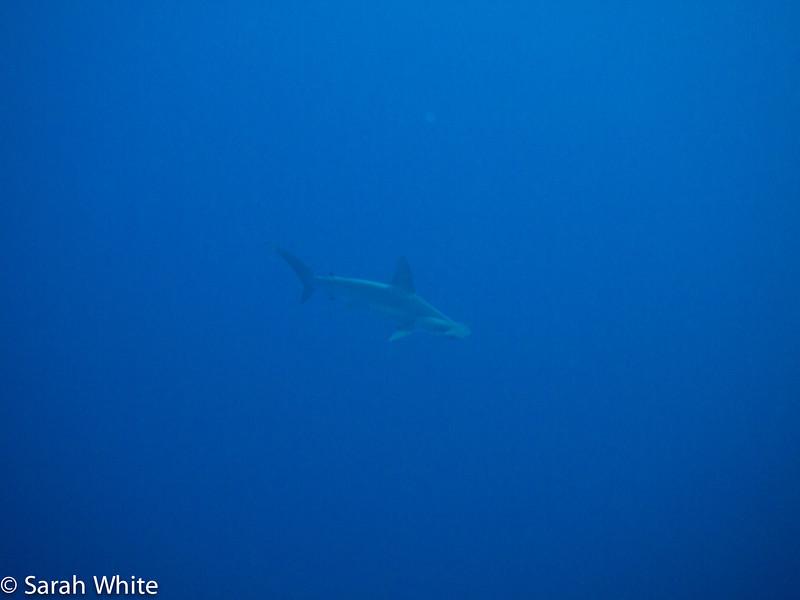 Project Shark 2013-140.jpg