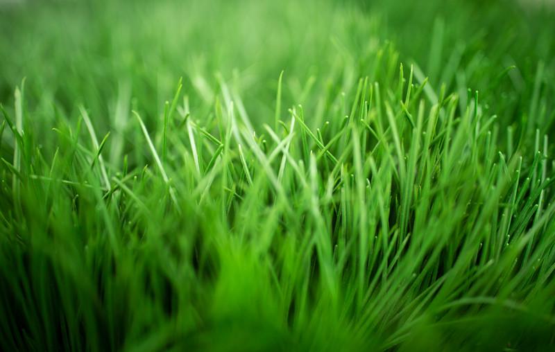 Grass-6115.jpg