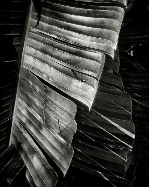 palm-leaves-in-shadow.jpg
