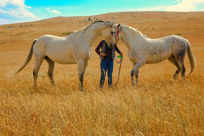 Horses 38.jpg