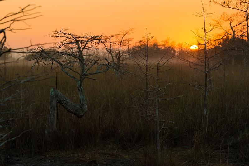 Everglades (35 of 60).jpg