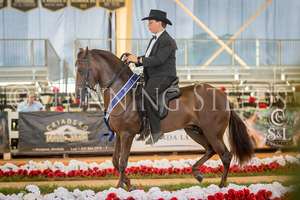 285-Fino Amateur Geldings and Colts 4 Years