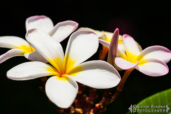 Hawaiian Plants & Flowers