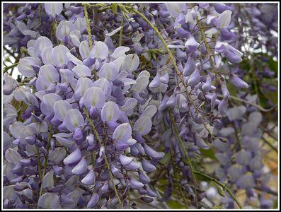 Flowers - Violet & Purple
