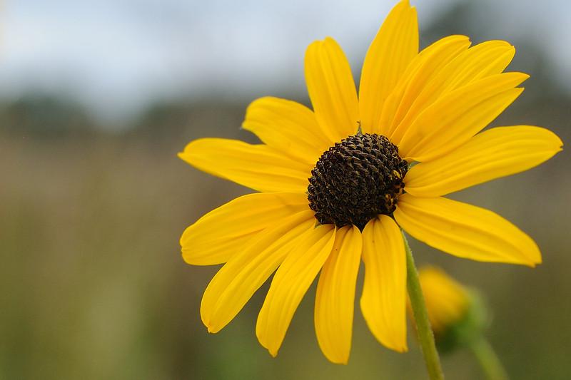 Sunflowers always make me smile.