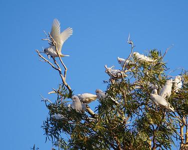 18 Australia