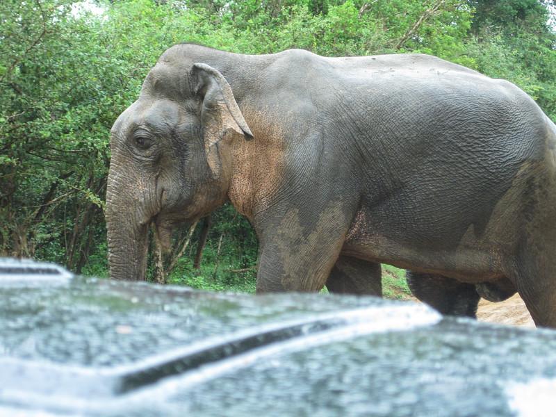 Sri_Lanka17-9626.jpg