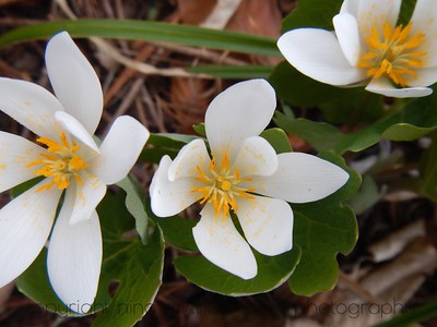 Native Plants of North America