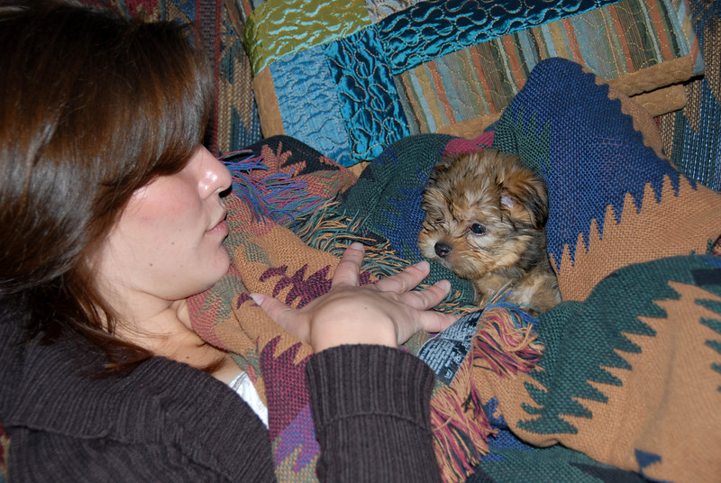 4/24/07 – Chip has won over everyone. First thing we do when we get home is find Chip to play with. No dog could be loved more.