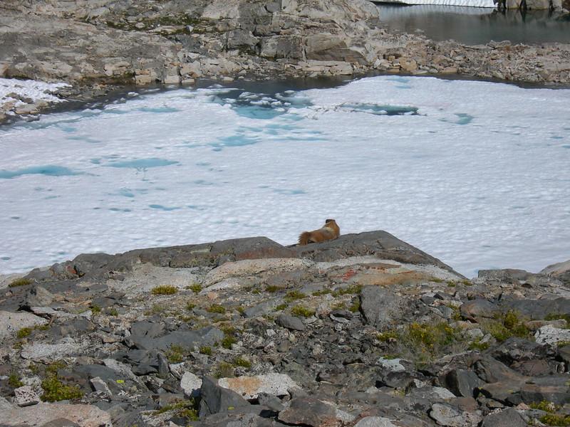 (2005  July 12-15) Rae Lakes Loop (clockwise).  Sierra Nevada Range, California.