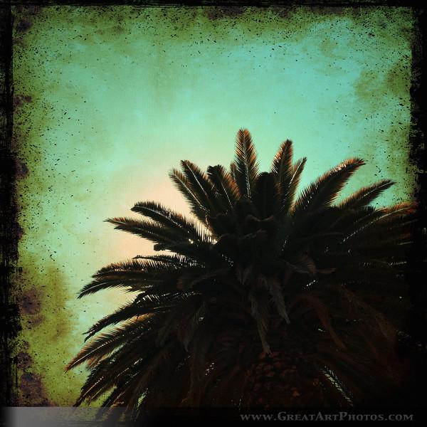 Old Palm.jpg