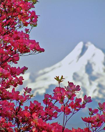 9. Wildflowers